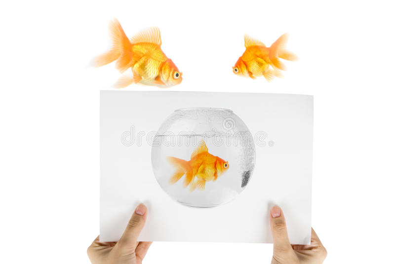 Download Gold Fish Photo Royalty Free Stock Photography - Image: 10507607