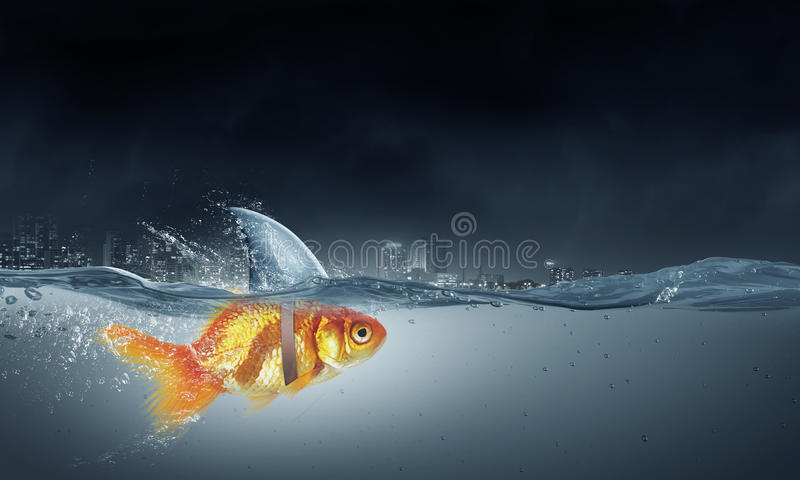 Gold fish with shark flip stock image