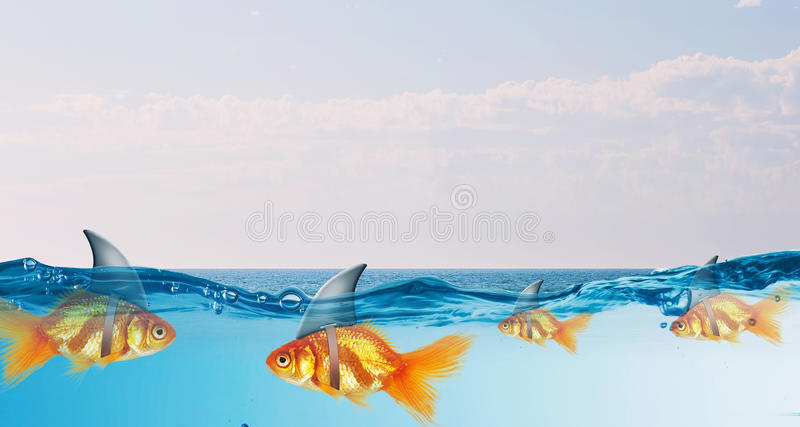 Gold fish with shark flip . Mixed media. Gold fish in water with shark flip on back stock photography