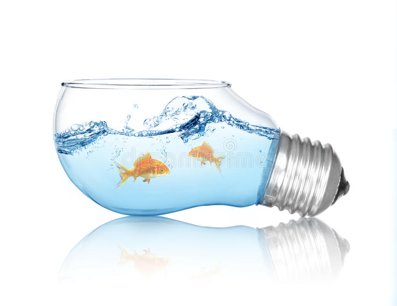 Gold fish in water inside an electric light bulb stock for Dream about fish out of water