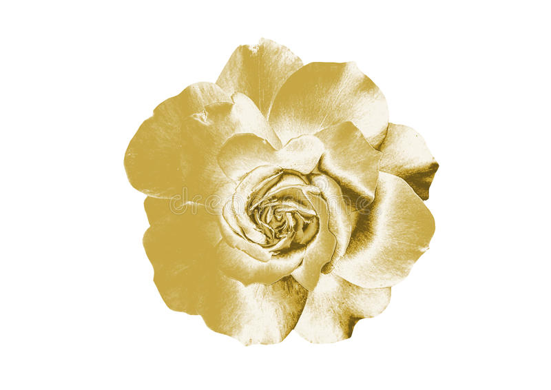 Gold flowers. Beautiful Gold flowers, close-up royalty free stock photography