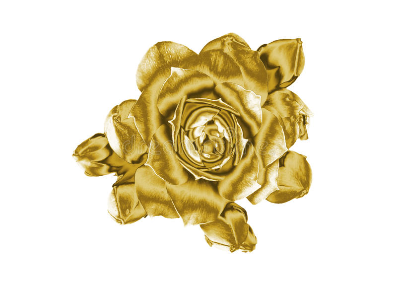 Gold flowers. Beautiful Gold flowers, close-up stock photos