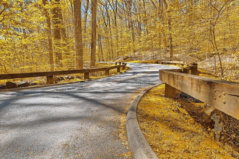 Gold Forest Road royalty free stock photo