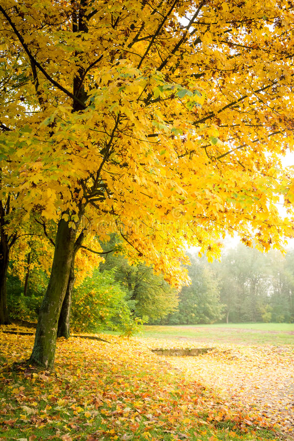Gold and green forest in the autumn, Europe. Gold and green forest in the autumn in Europe royalty free stock photography