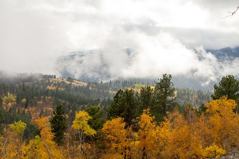 Gold and green trees covered by low cloud cover. Autumn in deadwood south dakota stock images