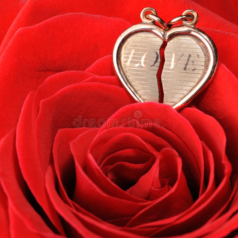 Gold heart in a red rose. Ring in a red rose. A jewelry on a blossoming bud of a flower stock image