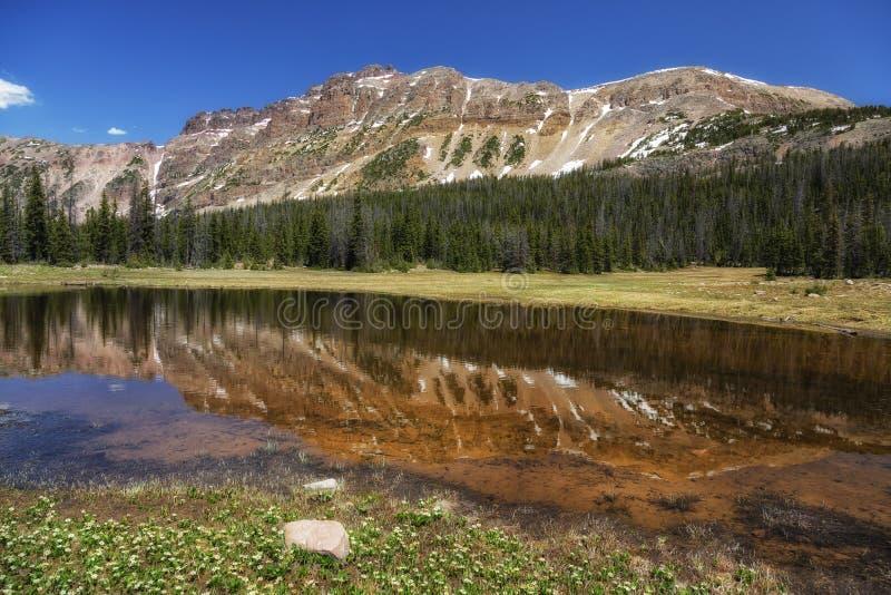 Gold im Teich stockbild