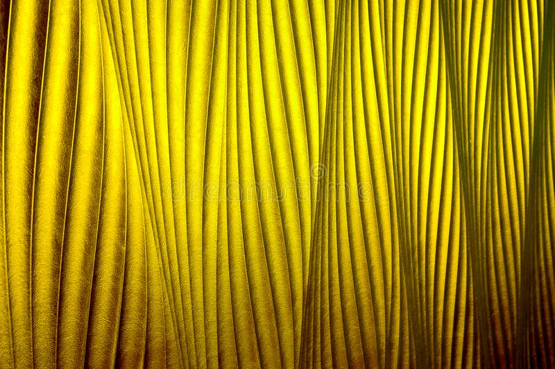 Gold leather texture. able to use as a background royalty free stock image