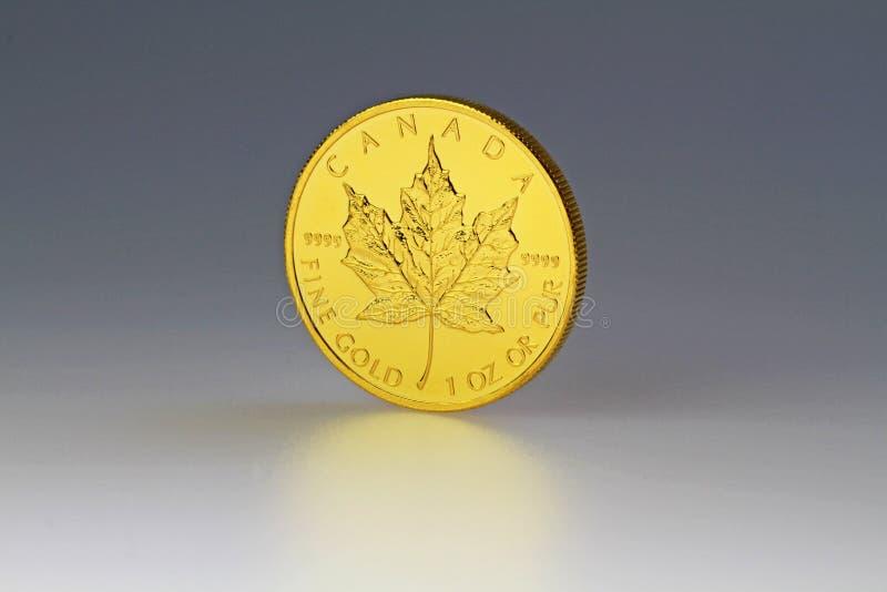 Gold_Maple fotos de stock