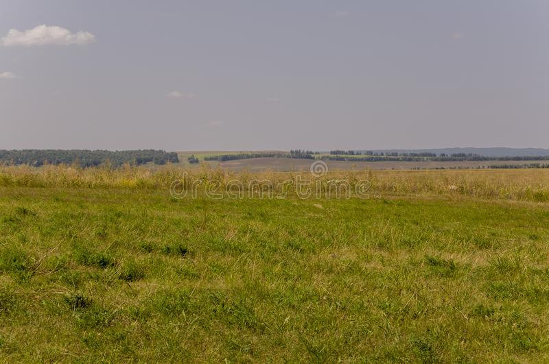Gold meadow with green trees far away and blue sky. Calm summer. Cultivated area. Agriculture. Yellow grass Good weather. Travelli. Ng stock image