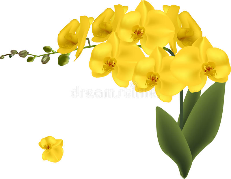 Gold orchid flowers isolated on white stock vector illustration of download gold orchid flowers isolated on white stock vector illustration of flower orchid mightylinksfo