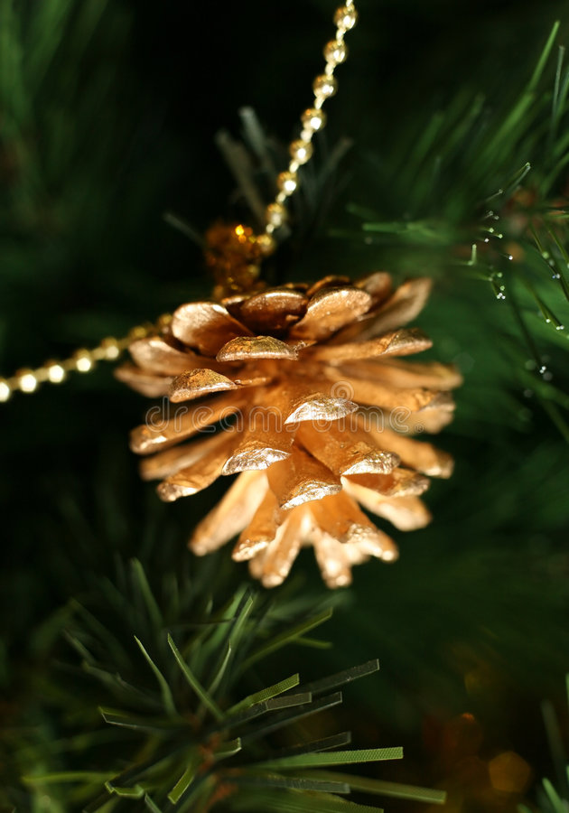 Download Gold pine cones stock photo. Image of background, nature - 3166092