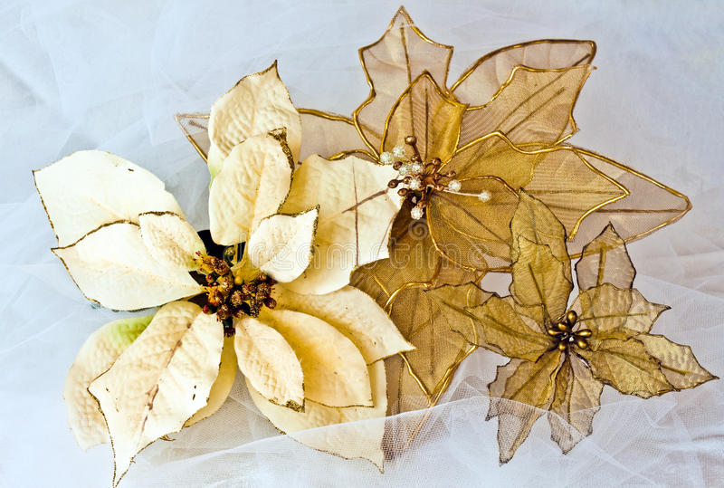 Gold Poinsettias. Three Gold Poinsettias on a brocade background royalty free stock image