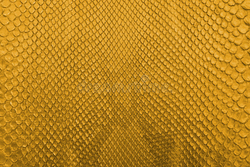 Gold python snake skin texture background. This image is python snake skin texture background royalty free stock photography