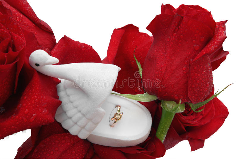 Gold ring in a box in the form of a swan on roses in dewdrops royalty free stock photography