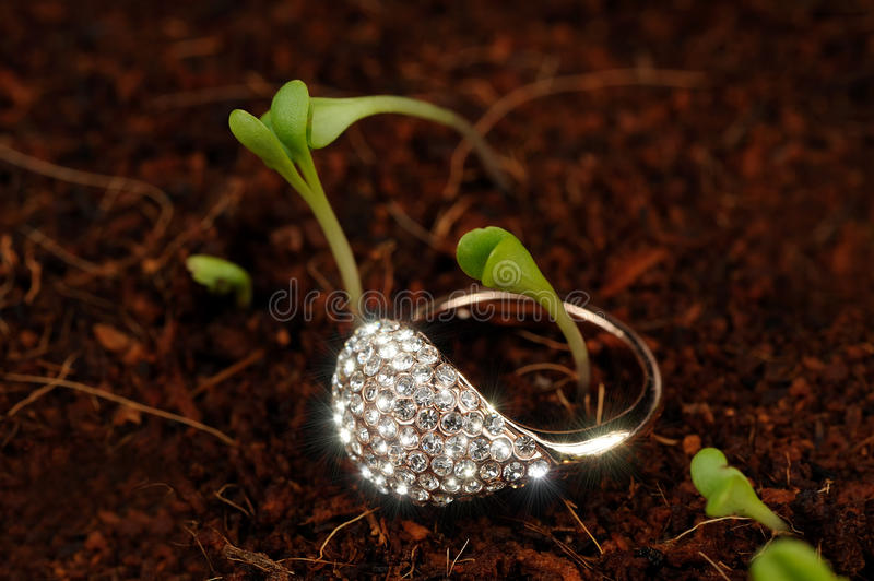 Gold Ring with Cubic Zirconia (CZ) on the Ground with Green Plants. A shiny gold ring with cubic zirconia (diamond substitute) on the ground with tiny green royalty free stock photos