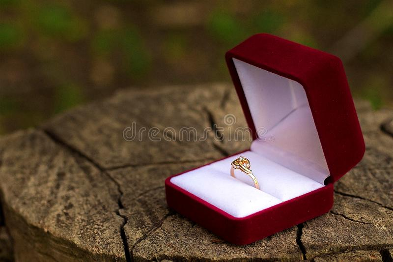 gold ring in a red box on the stump, wedding concept stock photos