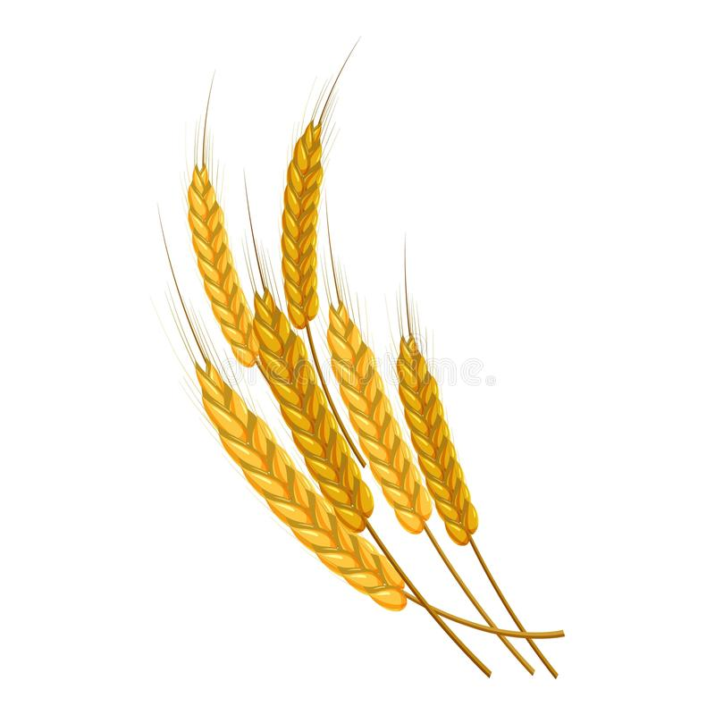 Gold ripe wheat ears icon, cartoon style. Gold ripe wheat ears icon. Cartoon illustration of wheat ears vector icon for web design vector illustration