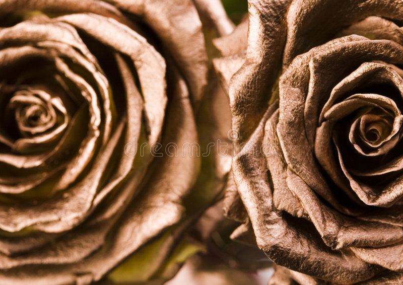 Gold rose royalty free stock image