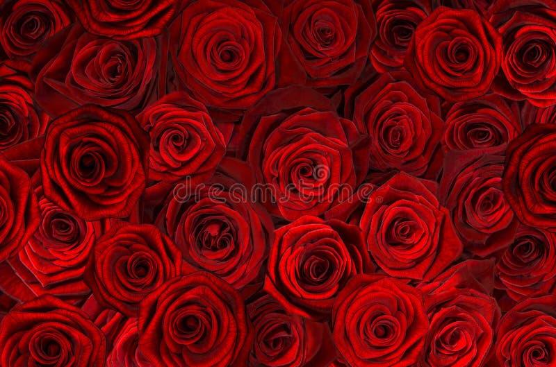 Gold roses close-up royalty free stock photos