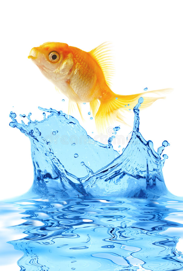 The gold small fish. Jumps out of water