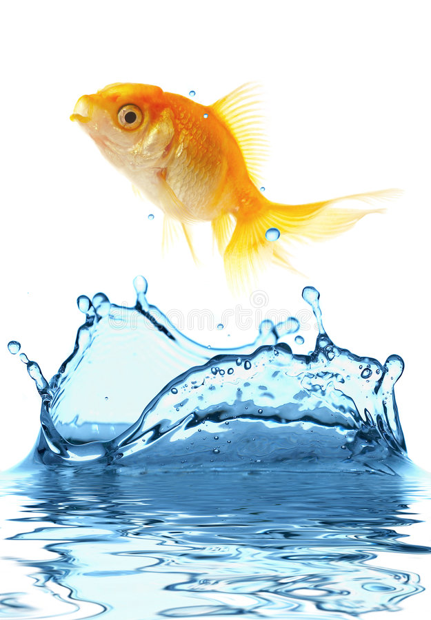 The gold small fish royalty free stock images
