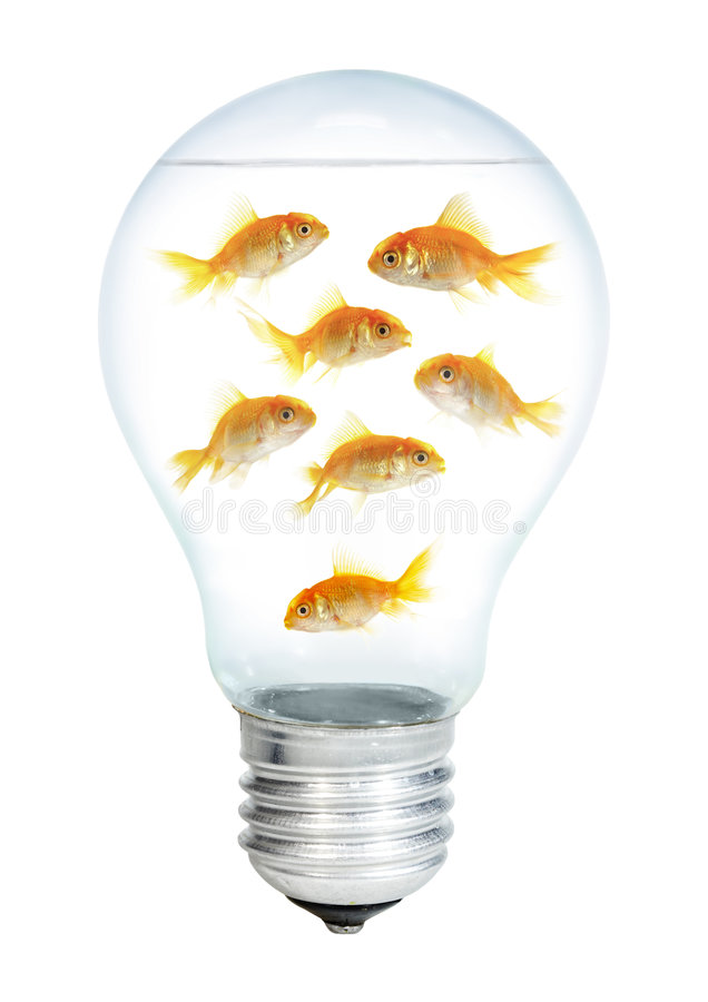 Gold small fish in light bulb royalty free stock image