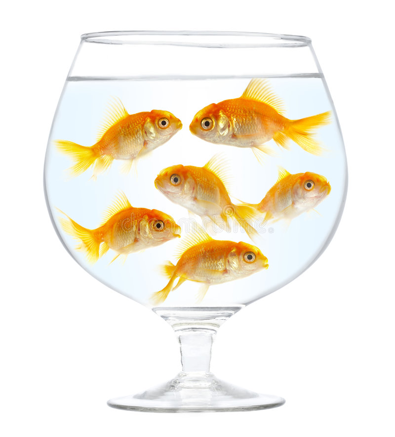 Gold small fishes stock photography