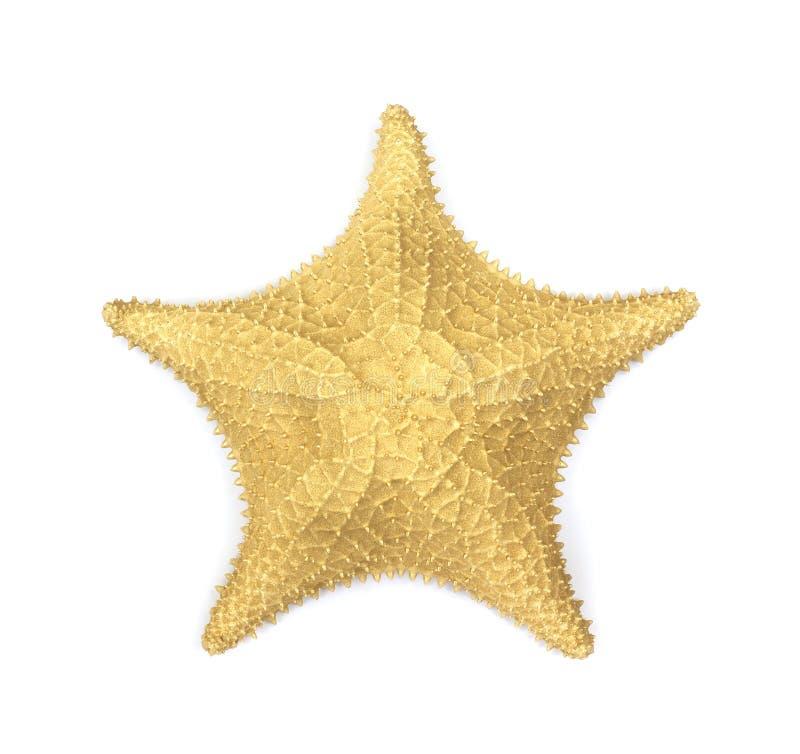 Gold starfish royalty free stock photography