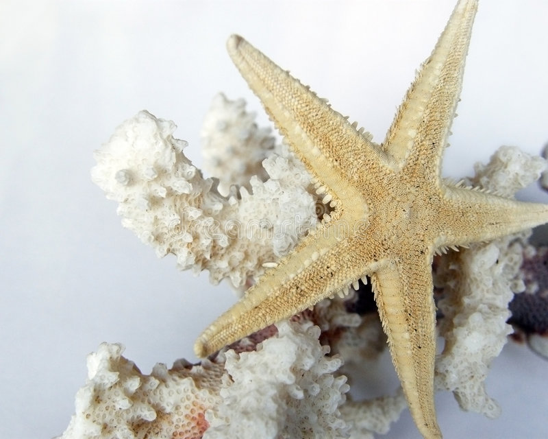 A gold starfish over a white coral branch stock images