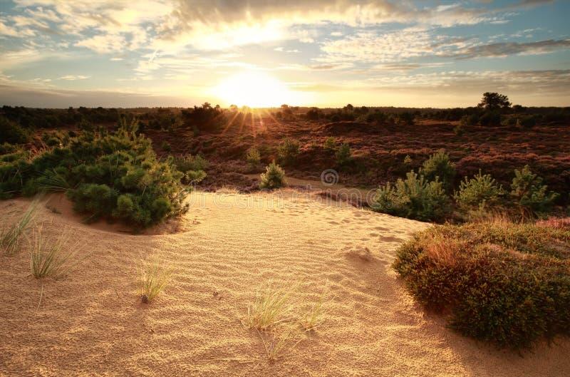 Gold sunrise over sand dune royalty free stock photo