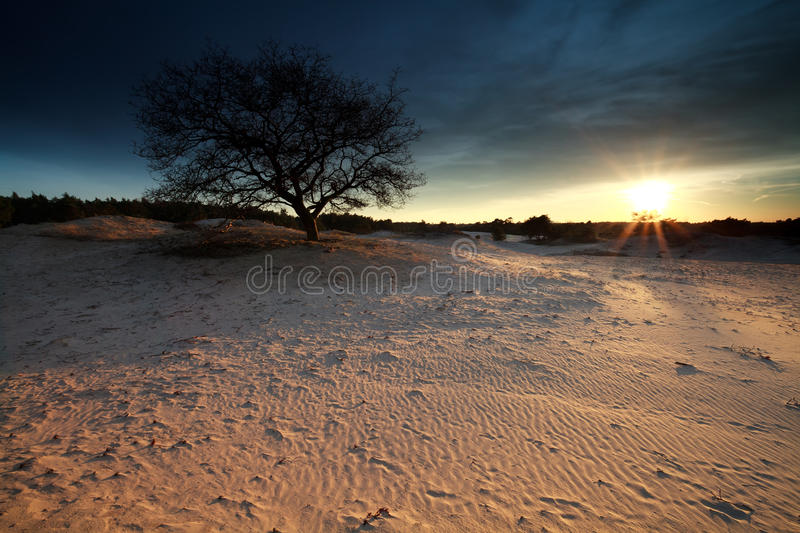 Gold sunshine over sand dunes royalty free stock photos