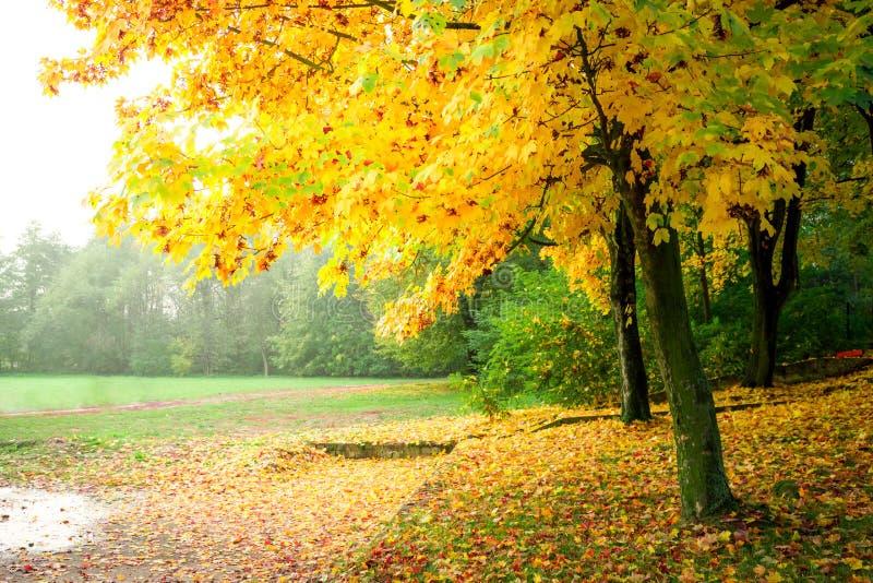 Gold und gelber Wald im Herbst lizenzfreie stockfotografie