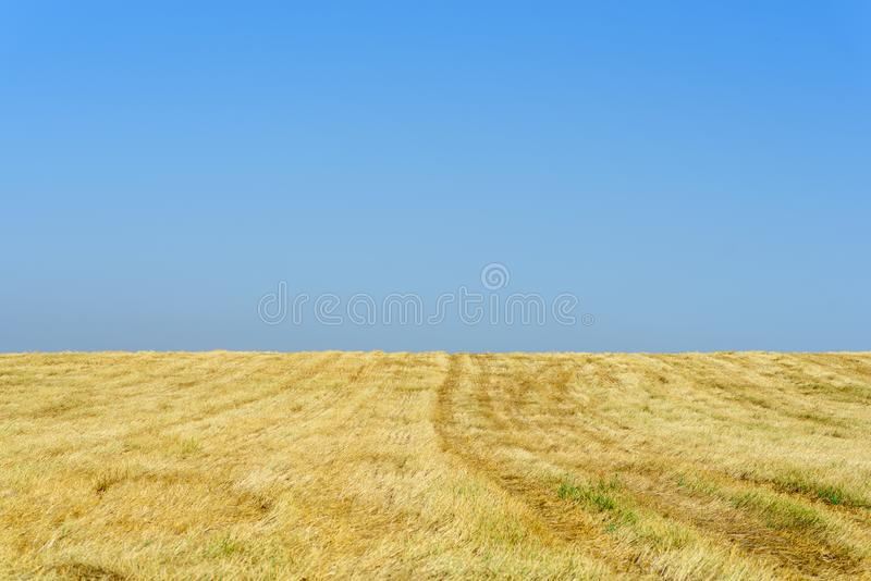 Gold wheat fields after harvest and blue sky in sunny day. stock images