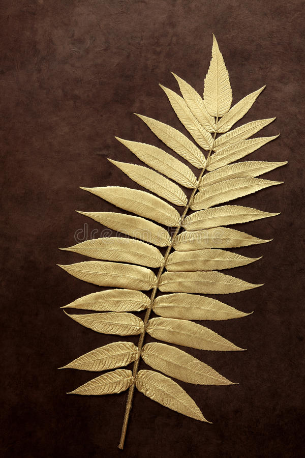 Goldblatt-Schönheit stockfoto