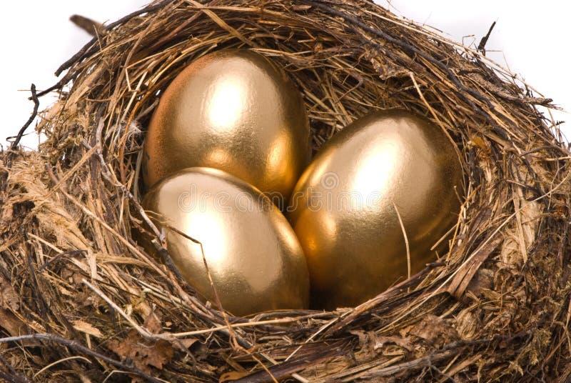 Goldeier in einem Nest lizenzfreies stockfoto