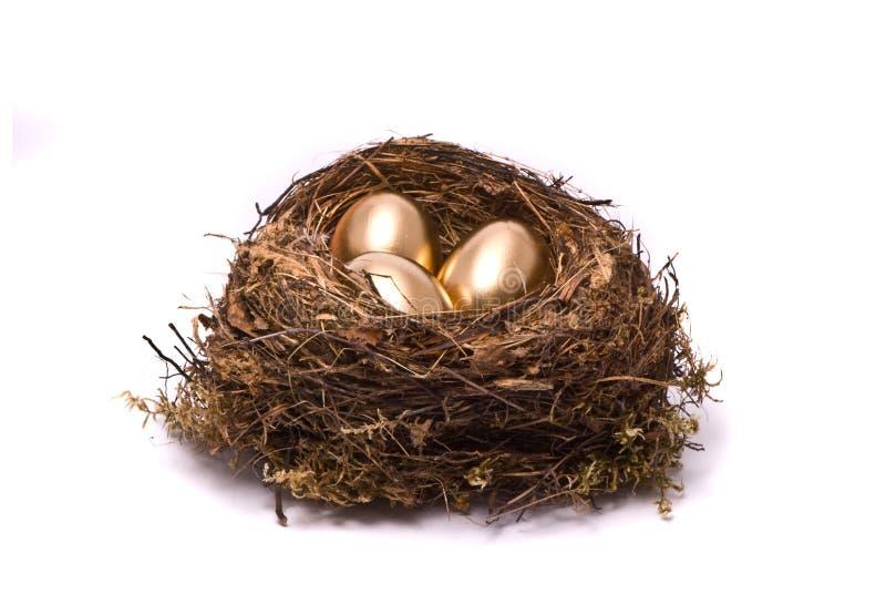 Goldeier in einem Nest lizenzfreies stockbild