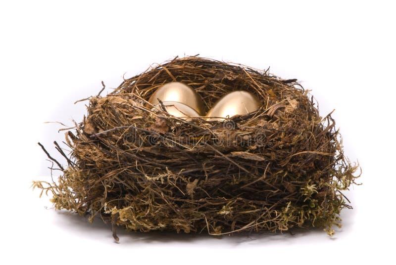 Goldeier in einem Nest lizenzfreie stockfotos