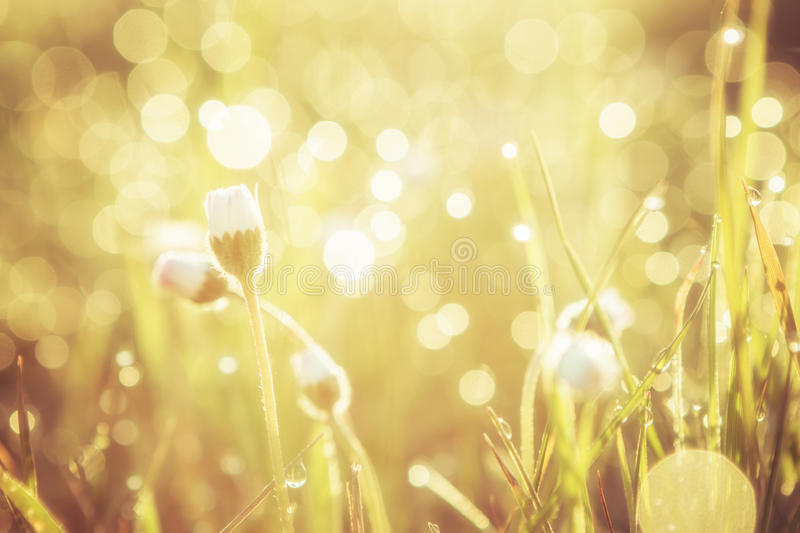 Golden abstract background concept, soft focus, bokeh, warm tone. Summer grass field with flowers, golden abstract background concept, soft focus, bokeh, warm royalty free stock photos