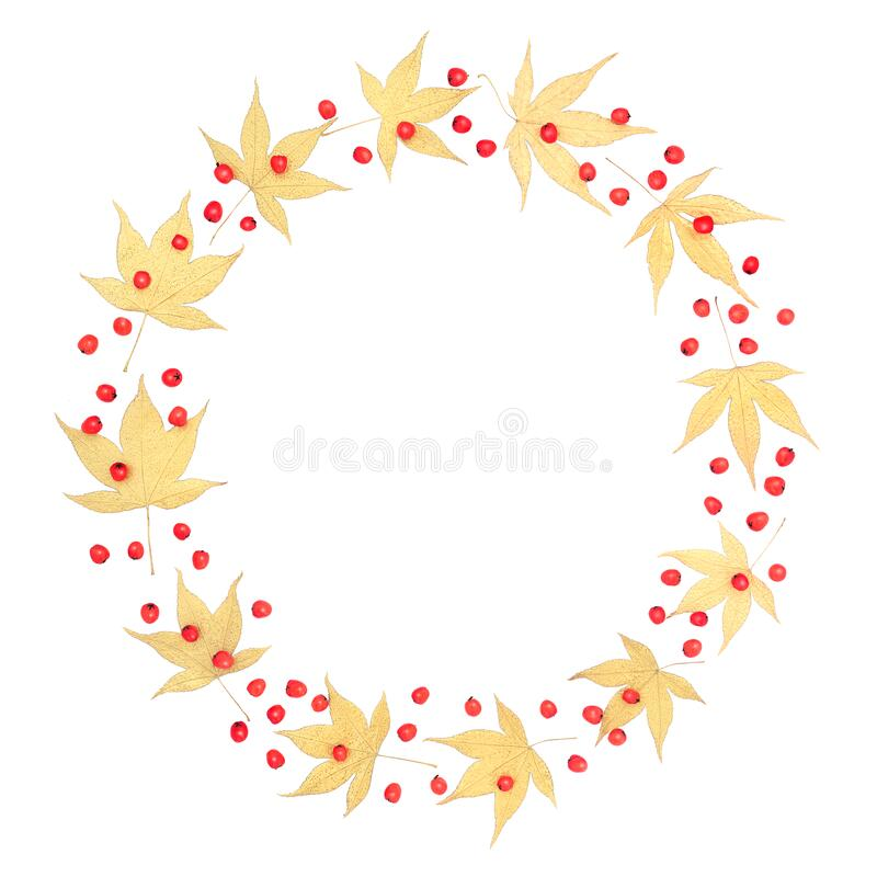 Golden Acer Leaf and Berry Wreath. Golden Japanese acer leaf and red berry wreath on white background with copy space. Zen minimalist symbol royalty free stock photography