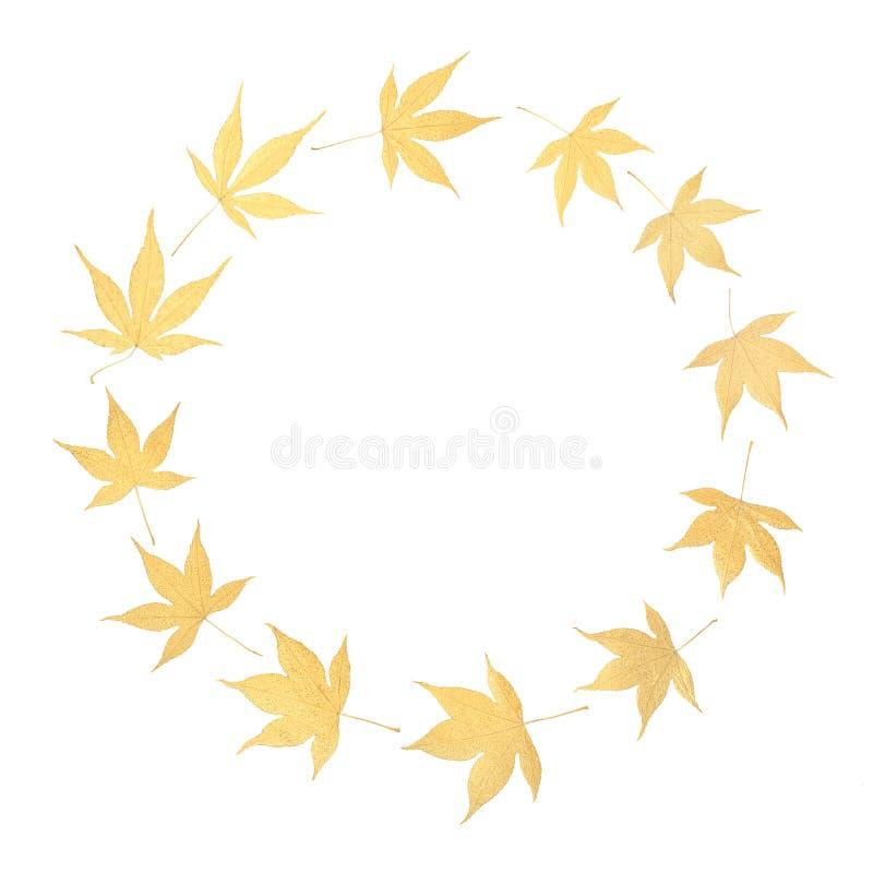 Golden Acer Leaf Wreath. Golden Japanese acer leaf wreath on white background with copy space. Zen minimalist symbol stock image
