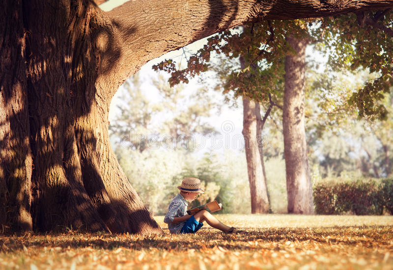 Golden afternoon dream. Boy reading book under big tree royalty free stock photo