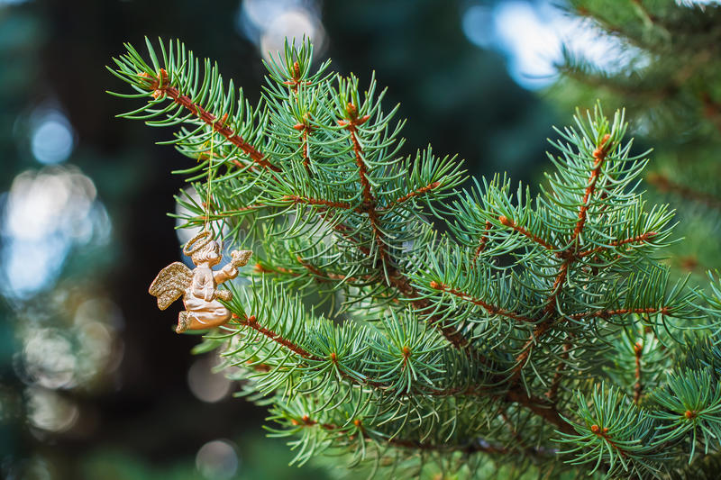 Golden angel with a bird on green spruce. Place for text. Element Christmas design. royalty free stock images