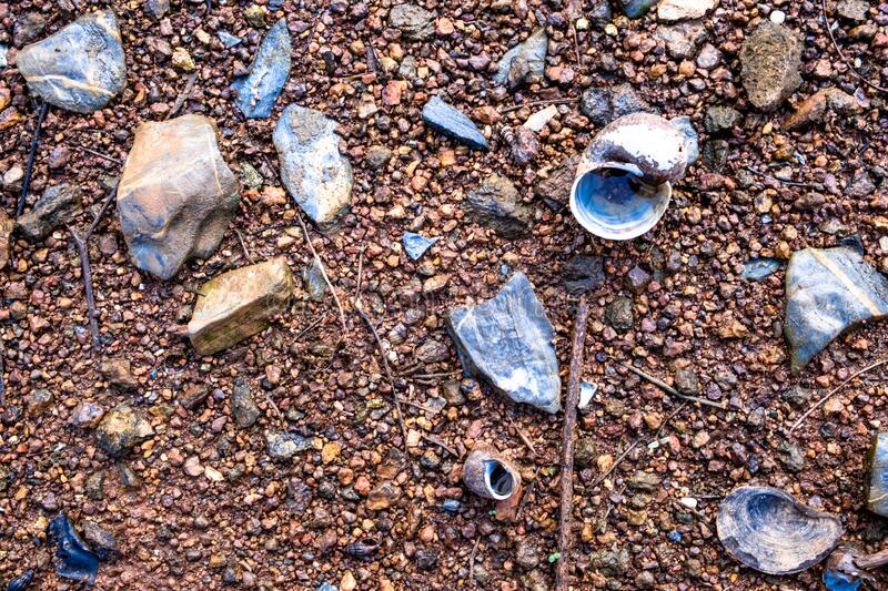 Golden apple snail`s shells and rocks scattered on the ground full of pebbles. stock photos