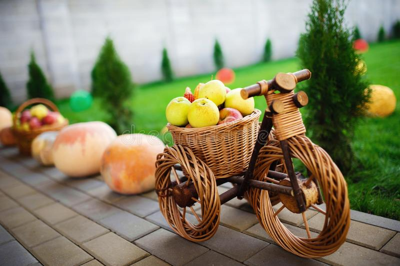 Golden apples on the wooden bicycle decored with pumpkins on the floor. stock photo