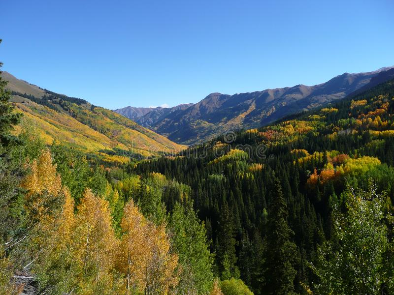 Golden Aspen along Million Dollar Highway, Colorado stock image