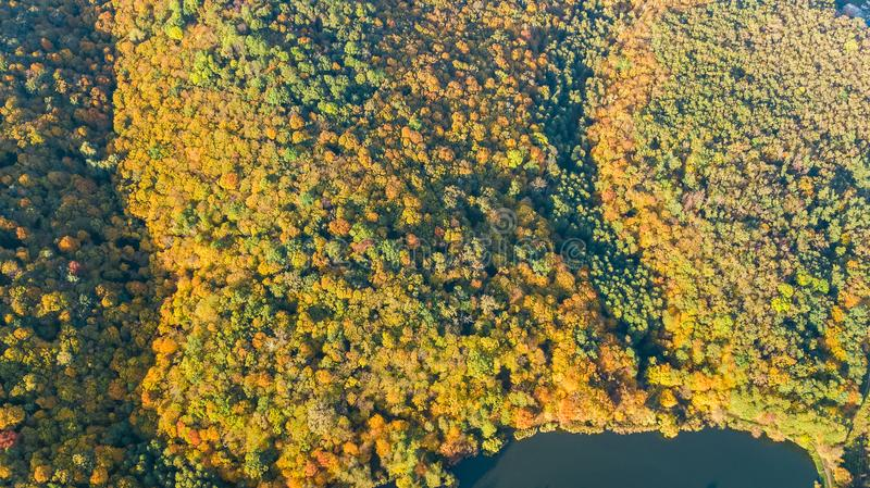 Golden autumn background, aerial drone view of forest with yellow trees and beautiful lake landscape from above, Kiev royalty free stock images