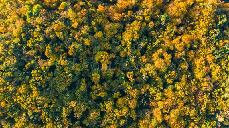 Golden autumn background, aerial drone view of beautiful forest landscape with yellow trees from above royalty free stock images