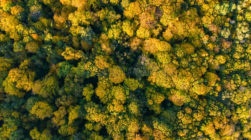 Golden autumn background, aerial drone view of beautiful forest landscape with yellow trees from above. Golden autumn background, aerial top view of beautiful royalty free stock photos