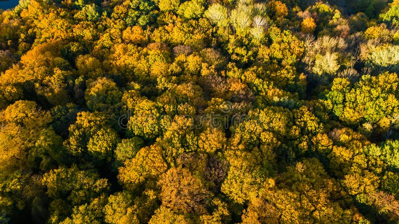 Golden autumn background, aerial drone view of beautiful forest landscape with yellow trees from above. Golden autumn background, aerial top view of beautiful royalty free stock photography